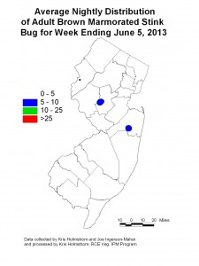 Adult brown marmorated stink bug population, 6/05/13