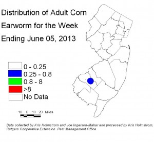 Adult corn earworm population, 6/05/13.