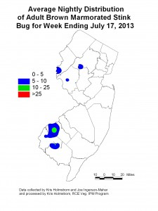 Brown Marmorated Stink Bug week ending 7/17/13