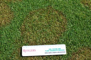 Brown patch on colonial bentgrass. Photo: Richard Buckley, Rutgers PDL
