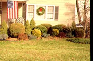 Cool Season Mites = Conifers & Broadleaf Evergreens
