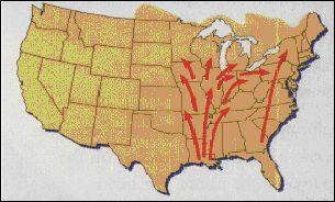 Potato Leafhopper & Migration