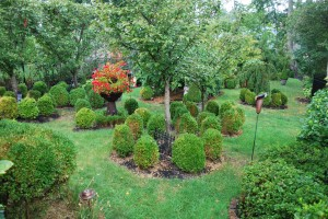 Formal Victorian gardens. Note the brown boxwoods. Photo: Richard Buckley, Rutgers PDL