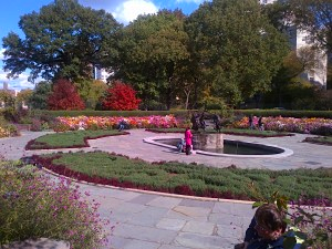 A very colorful display of Korean mums in the Conservatory Garden at Central Park.