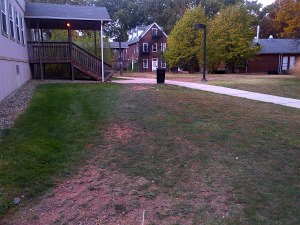 Lawn area entering the onset of dormancy. Shoot growth is shutting down and leaves are wilting.