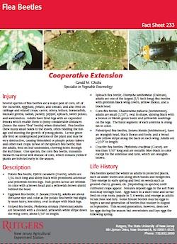 Flea-Beetles