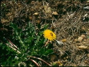 Bees prefer dandelions.  Treat in early spring, BEFORE dandelions bloom