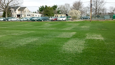 Rectangular plots with a tinge of tan-color are varieties of Kentucky bluegrass exhibiting slow spring green-up (photo taken 18 Apr. 2014).