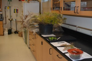 Sample submissions for April 14 in Rutgers Plant Diagnostic Laboratory