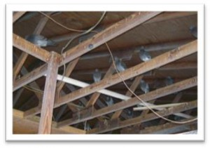 Birds in the rafters