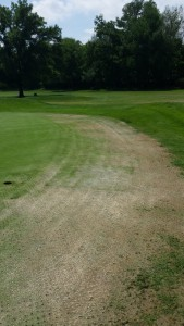 Pythium root rot or not...Photo: anonymous