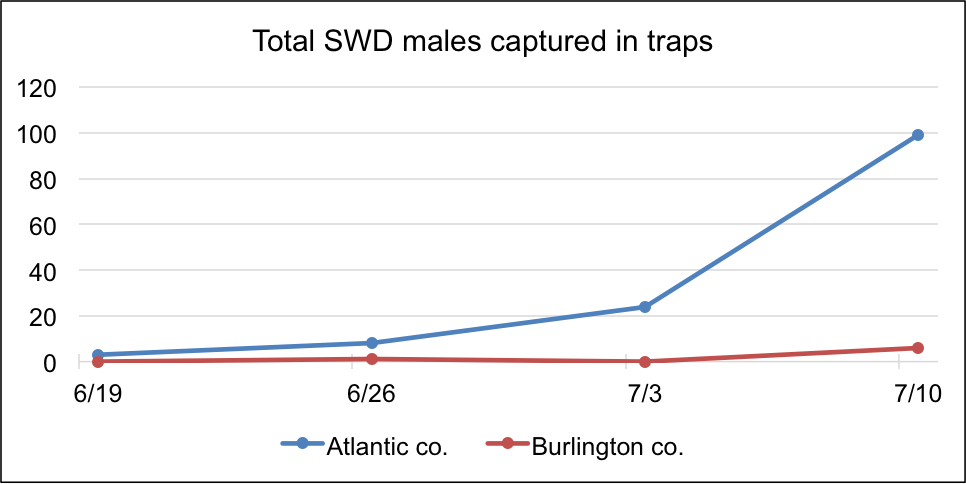Total SWD Males Captured in Traps