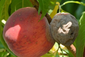 Touching Fruit - GaLa02