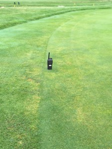 Annual bluegrass weevil damage. Photo: anonymous
