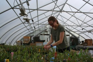 Dr. de Lange working in the greenhouse