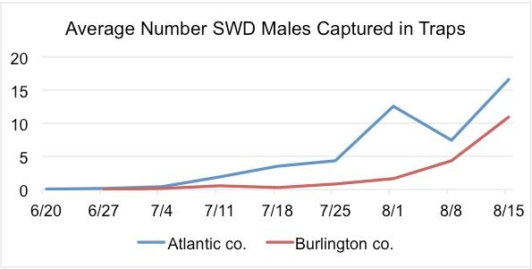 SWD Trap Counts 8-18-2015