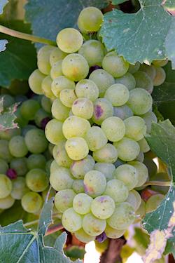 Chardonnay CA Trip Sept 05 353