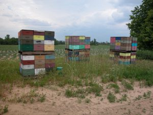 Bee hives for squash pollination