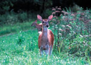 Sadc Cost Sharing For Deer Fence On Permanently Preserved