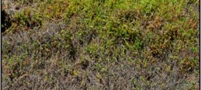 Root-feeding Pests of Cranberries